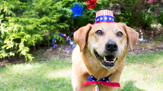 Fireworks & Your Pet