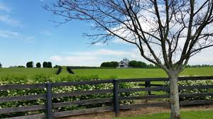 7 Considerations When Buying A Horse Property