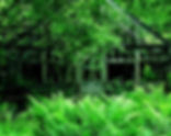 lois-rowe-640x480.jpg