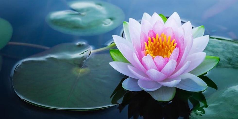 Gentle Yin Yoga