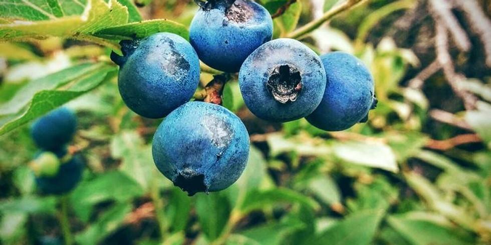 Tawas Blueberry Farm Morning Meditation & Yoga