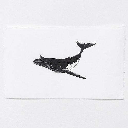 Egon | humpback whale