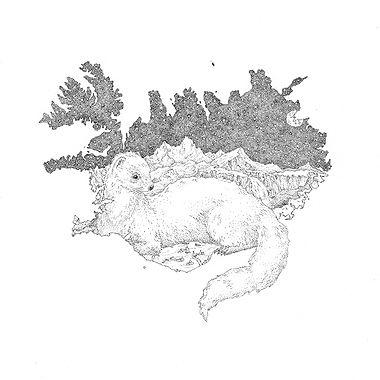 iceland-mink-www.jpg