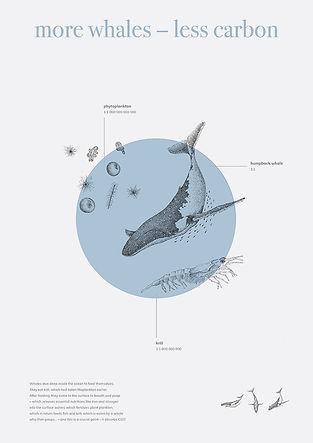 wieloryb whale katarzyna roman