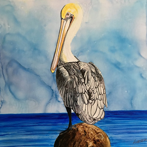 Virginia's Pelican