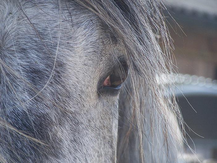 pferde-horse.JPG
