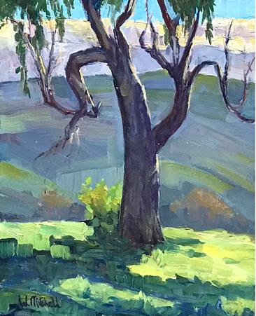 Chorro Ranch Eucalyptus