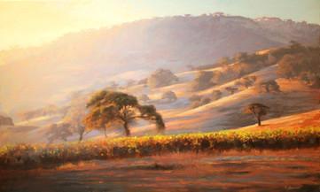 1591.  Vineyard Morning, Los Alamos