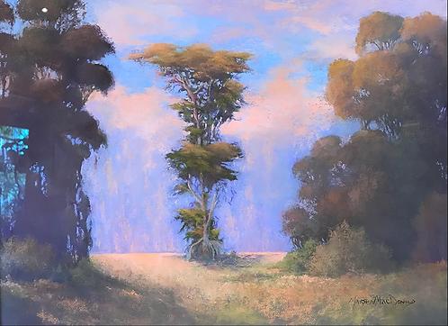 Cypress at Douglas Family Preserve