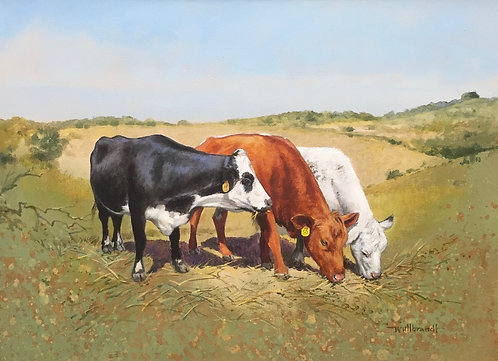 SOLD 3 Cows
