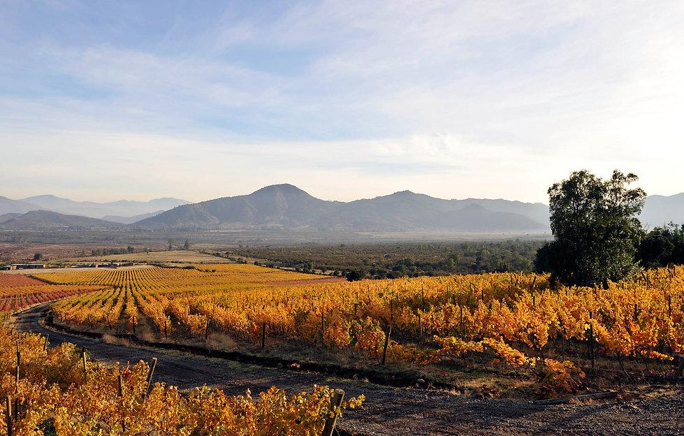 Koyle Koyle vineyards autumn.jpg