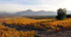 Koyle Koyle vineyards autumn -web.jpg