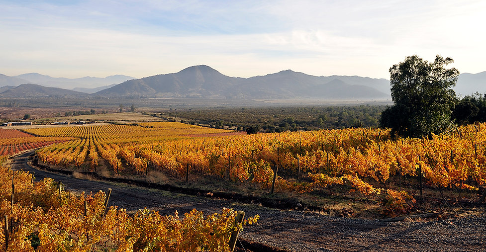 Koyle Koyle vineyards autumn -web.jpg