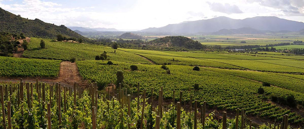 Biodynamic Chilean vineyard