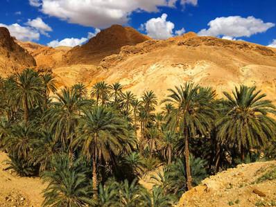 Oasis, Tunisia