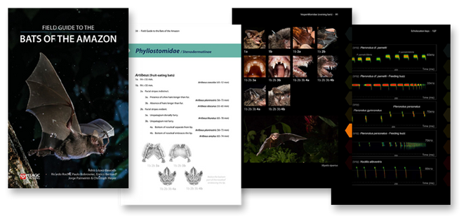 The Field Guide to The Bats of The Amazon