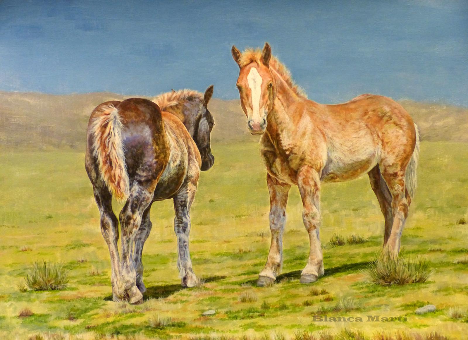 Poltres de cavall pirinenc català