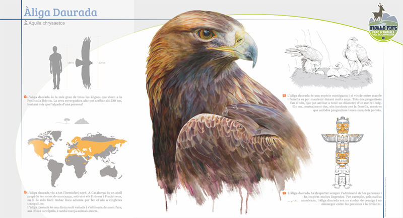 Cartel del águila real