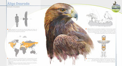 Poster about the Golden eagle