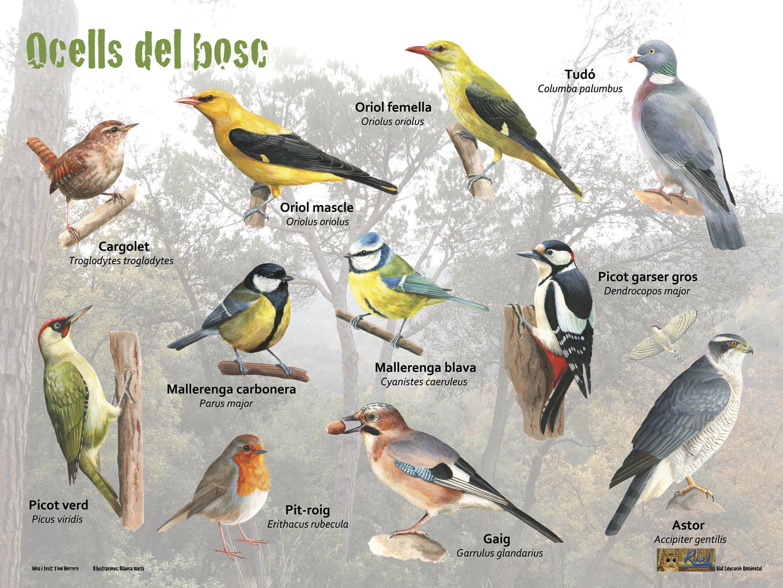 Ocells del bosc