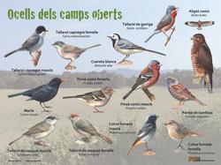 Birds of the fields
