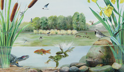 The ecosystem of the lake