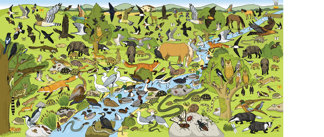 Find the Animals