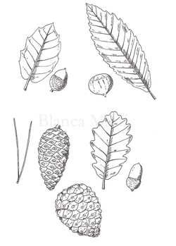 Plantas de Can Pica