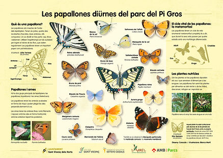 cartell_papallones.jpg
