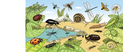 Los insectos del Parque del Foix