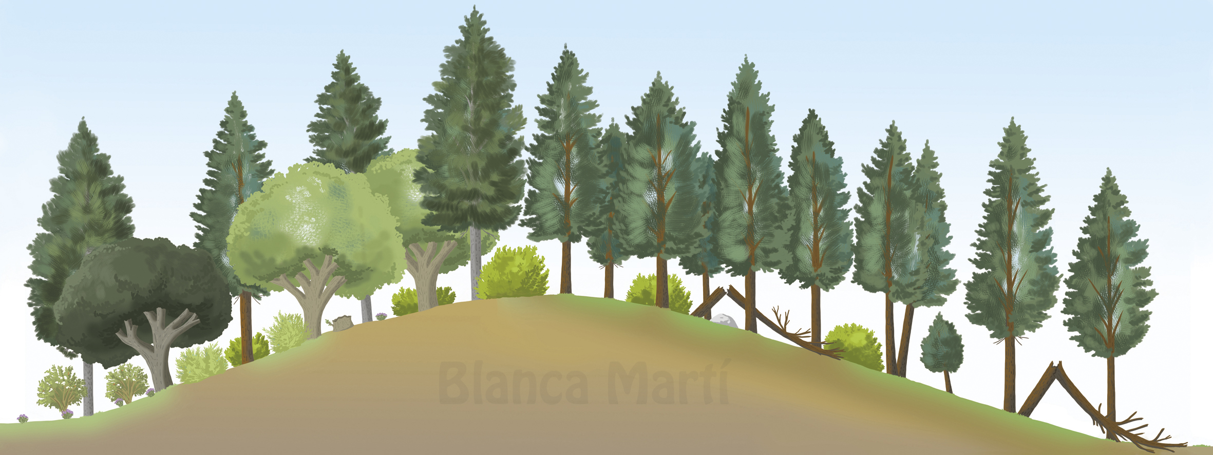 Schematic outline of a forest