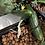 Thumbnail: Cucumber