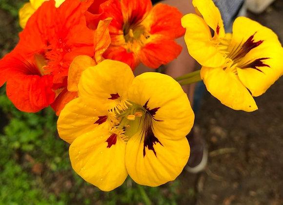 Flor Comestible Mastuerzo