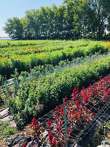 garden picture.jpg