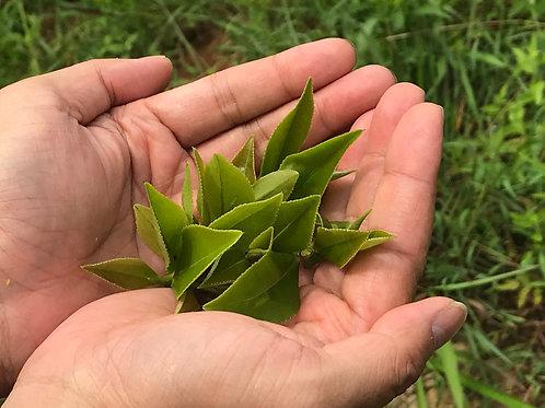 Taiwan Nantou Green