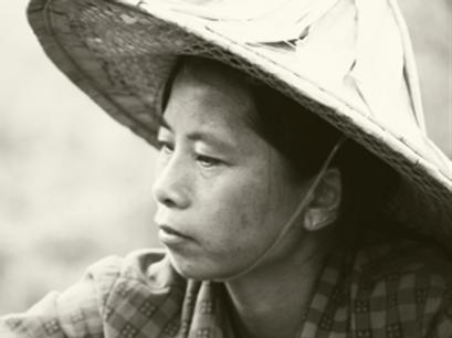 China Bai Mu Dan - White Peony 2019