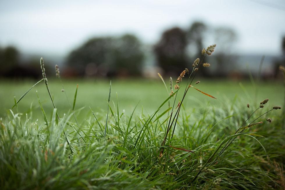 Grass To Milk - Web-ready (16 of 138).jp