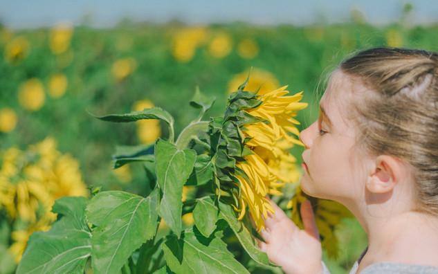 Milton Sunflower Family Session
