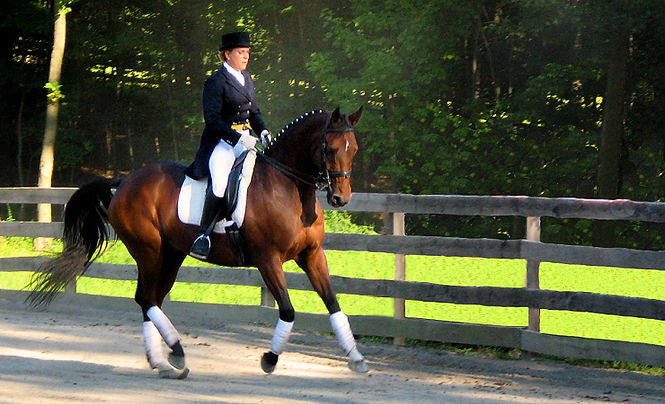 Susan Stegmeyer | Kingdom Keys Dressage