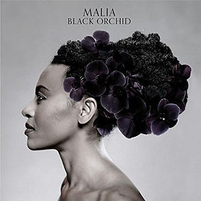 black orchid cover.jpg