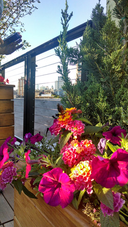 FlowerHumBird.jpg
