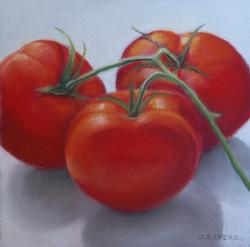 Tomato V