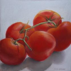 Tomato IV
