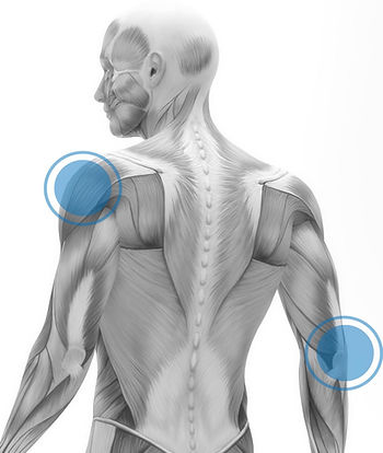 pain shoulder back muscles the injury clinic