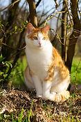 cat-2198984_1920.jpg