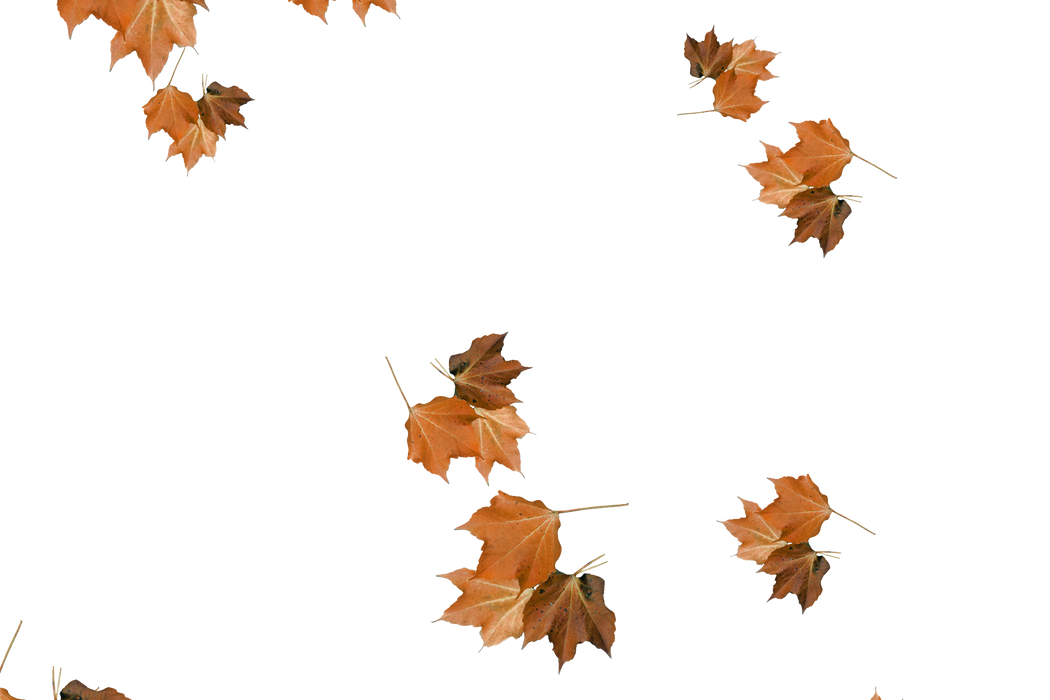 Falling leaves Photoshop Overlay | Stunning autumn leaves transparent background