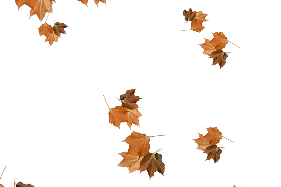 Falling leaves Photoshop Overlay   Stunning autumn leaves transparent background