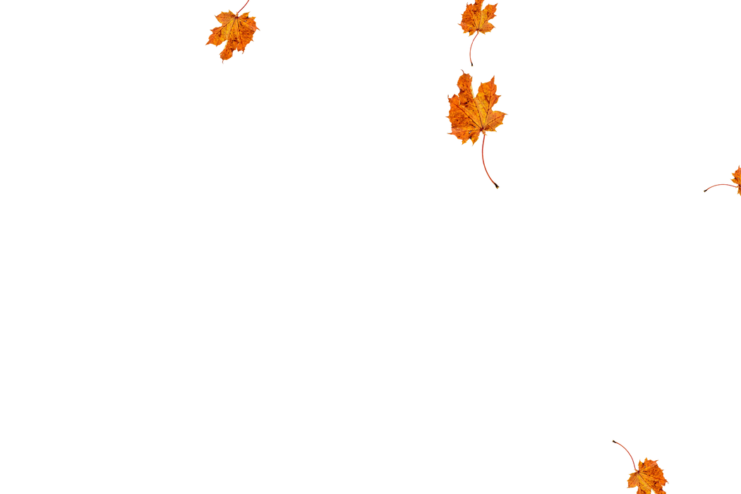 Falling leaves Photo Overlay | Lovely autumn leaves transparent background