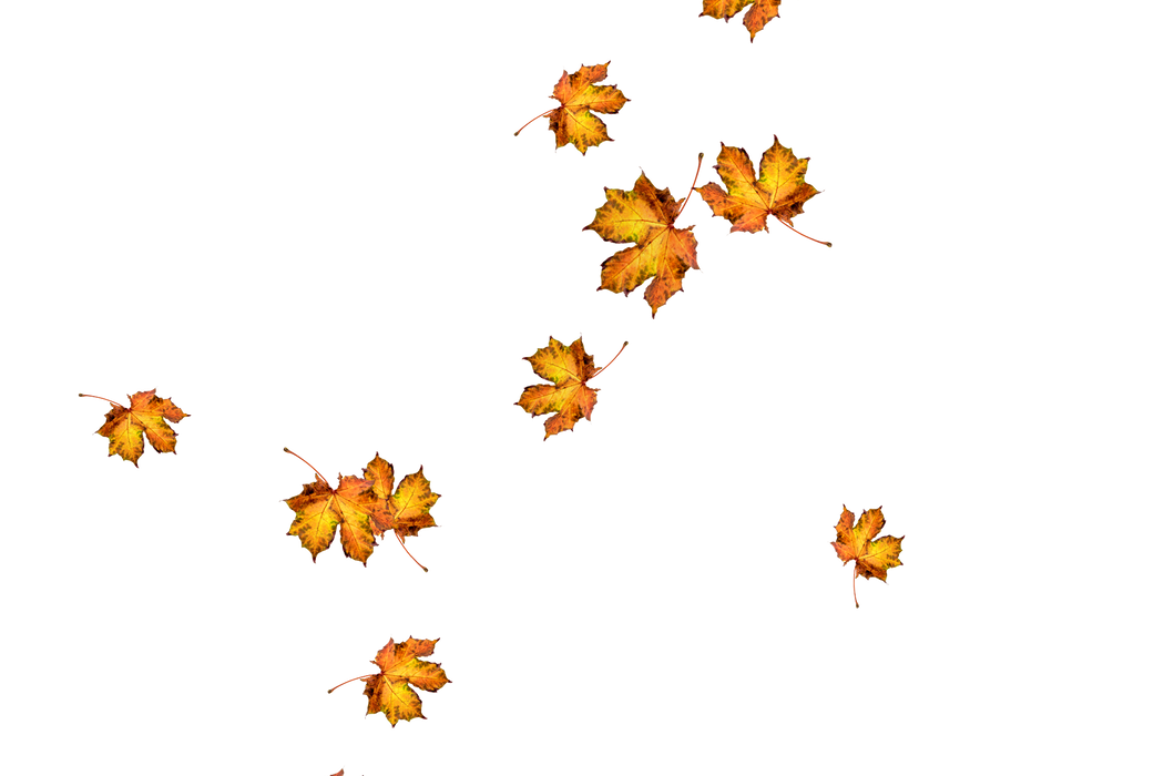 Falling leaves Overlays for Photoshop | Stunning autumn leaves transparent background