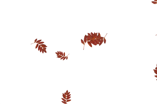 Glorious autumn leaves transparent background | Falling leaves Overlay for Photoshop